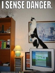 funny-pictures-cat-senses-danger