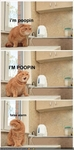 funny-pictures-cat-tries-to-poop
