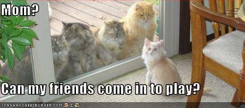 funny-pictures-cat-wants-to-invite-friends-over