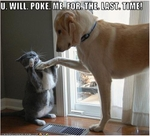funny-pictures-cat-will-not-be-poked-again