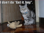 funny-pictures-cat-will-not-fetch