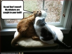funny-pictures-cats-are-stuck-together
