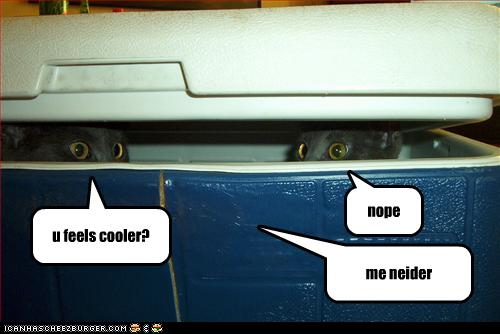 funny-pictures-cats-hide-in-cooler
