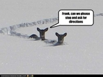 funny-pictures-deer-are-lost