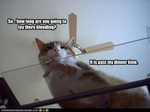 funny-pictures-it-is-dinner-time-for-your-cat