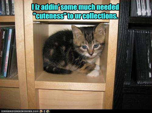 funny-pictures-kitten-adds-cuteness-to-your-shelf1