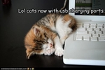 funny-pictures-kitten-has-a-charging-port