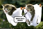 funny-pictures-kitten-has-a-wedgie