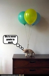 funny-pictures-kitten-has-balloons