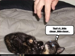 funny-pictures-kitten-hopes-you-come-closer