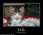 funny-pictures-kitten-is-evil