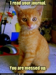 funny-pictures-kitten-read-your-journal