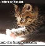 funny-pictures-kitten-tests-sunbath-temperature