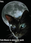 funny-pictures-moon-belongs-to-cat