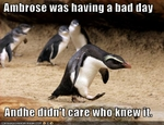 funny-pictures-penguin-has-a-bad-day
