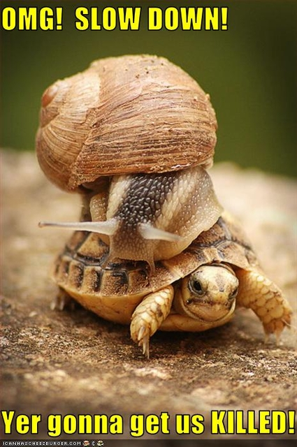 funny-pictures-snail-is-on-turtle