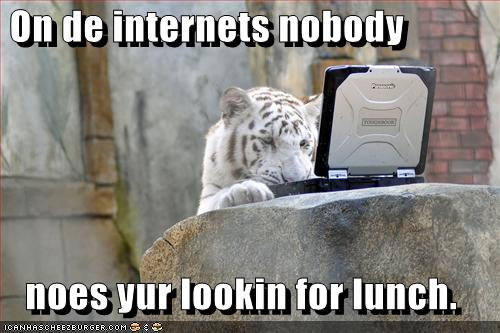 funny-pictures-tiger-is-looking-for-lunch