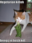 funny-pictures-vegetarian-cat-brings-in-a-kill