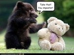 funny-pictures-bear-pummels-an-imposter