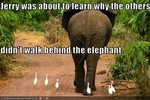 funny-pictures-bird-walks-behind-elephant