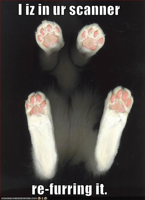 funny-pictures-cat-adds-fur-to-your-scanner