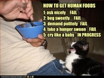 funny-pictures-cat-asks-for-human-food