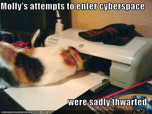 funny-pictures-cat-attempts-to-enter-cyberspace
