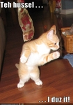 funny-pictures-cat-dances-the-hussle