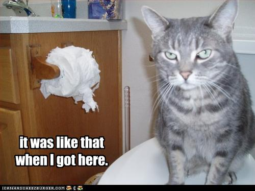 funny-pictures-cat-denies-ripping-toilet-paper