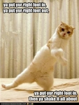 funny-pictures-cat-does-hokey-pokey