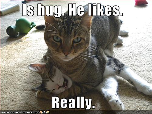 funny-pictures-cat-gives-hug