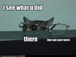 funny-pictures-cat-has-glasses