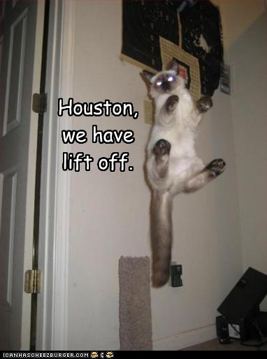 funny-pictures-cat-has-lift-off