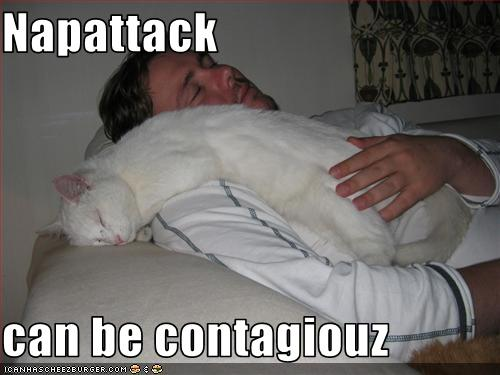 funny-pictures-cat-has-nap-attack