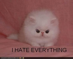 funny-pictures-cat-hates-everything