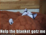 funny-pictures-cat-is-eaten-by-blanket