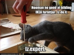 funny-pictures-cat-is-expert-with-furniture