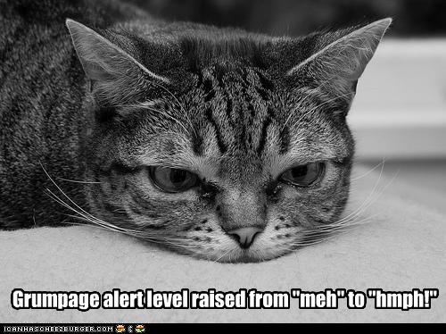 funny-pictures-cat-is-grumpy