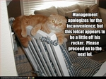 funny-pictures-cat-is-off-his-rocker