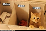 funny-pictures-cat-is-sorted-with-laundry