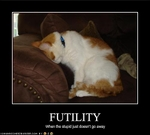 funny-pictures-cat-is-stupid