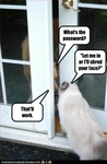 funny-pictures-cat-knows-the-password