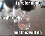 funny-pictures-cat-prefers-drink-on-the-rocks