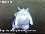 funny-pictures-cat-regrets-buying-trampoline