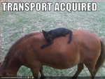 funny-pictures-cat-rides-horse