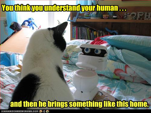 funny-pictures-cat-stares-at-toy-toilet