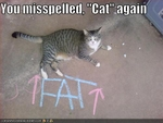 funny-pictures-cat-thinks-you-spelled-something-wrong