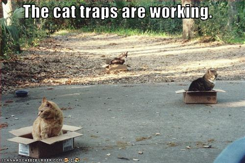 funny-pictures-cat-traps-are-working