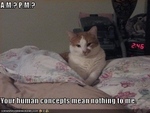 funny-pictures-cat-wakes-you-at-3-am