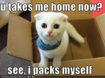 funny-pictures-cat-wants-to-go-home